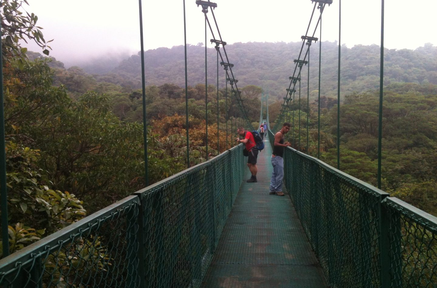 Monteverde Cloud Forest Hanging Bridges - La Oveja Negra Tamarindo Tours