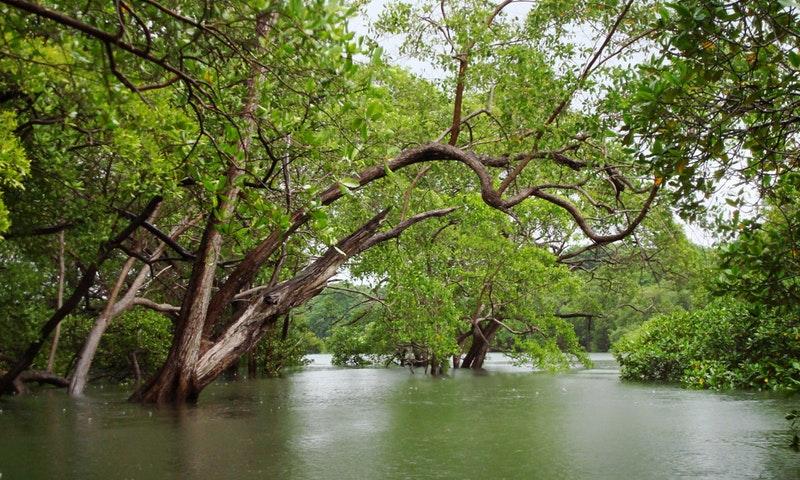 Kayak Estuary Tamarindo - La Oveja Negra Tamarindo Tours